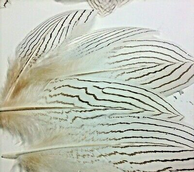 5pcs Delicate 15-20cm Silver Pheasant Feathers DIY Craft Millinery Jewellery