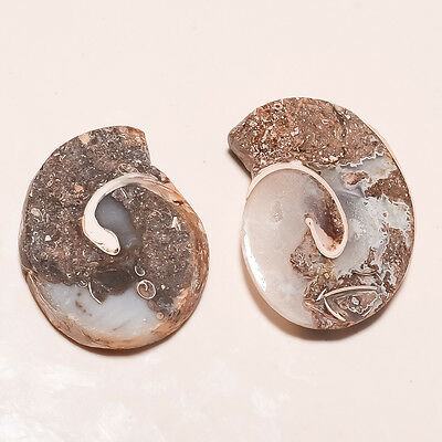 Genuine Natural Mineral Snail Fossil Agate Druzy Pair Of Earrings Wholesale Lot