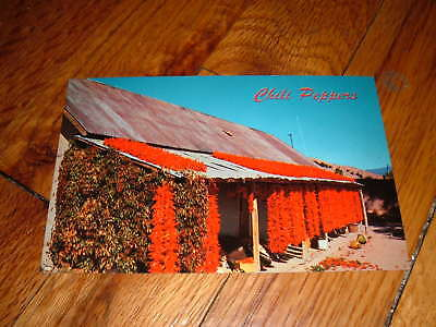 UNIQUE Vintage OLD POSTCARD CHILI PEPPERS on NATIVE HUT
