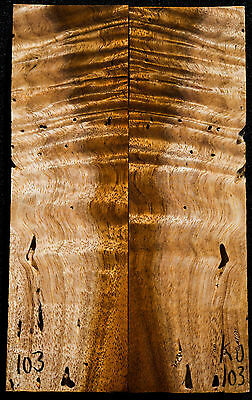 "Curly Koa #103 Knife Scales 7.3""x 2.25"" x 3/8"" worm holes"