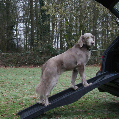 Nobby Rampe pour Chiens,