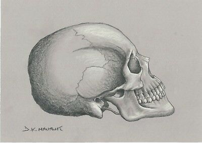 "Dimitris C. Milionis ""SKULL"" Signed Graphite & White Pencil Drawing 2011"
