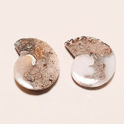 Natural Mineral Snail Fossil Agate Druzy Pair Of Earrings Wholesale Lot Gift New