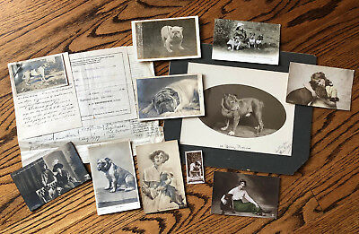 Historical 1915 Documents American Kennel Bulldog Photographs Rodney Rosador