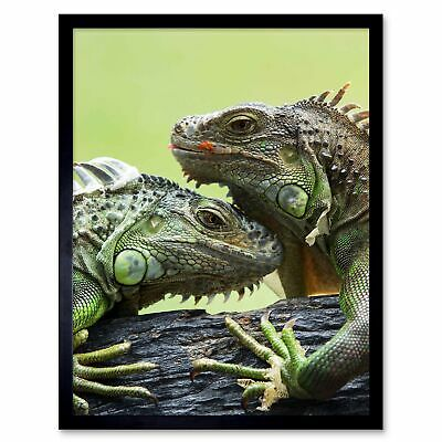 Photography Nature Animal Lizard Iguana Scales Spines Heads 12X16 Framed Print