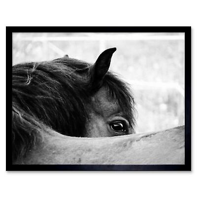 BLACK AND WHITE HORSE EYE Print PHOTO POSTER A4 or A3 Wall