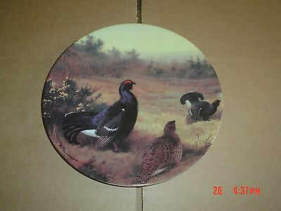 Bradford Exchange Collectors Plate BLACK GROUSE IN THE SPRING GORSE