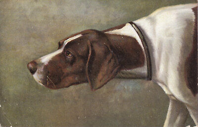 Vintage UK postcard featuring a head shot of the dog breed POINTER