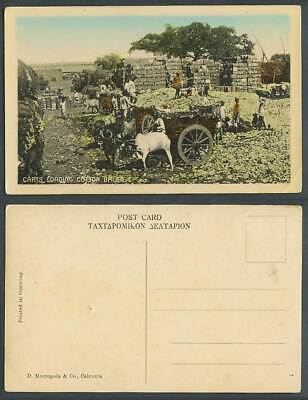 India Old Colour Postcard Bullock Carts Loading Cotton Bales Native Workers T 60