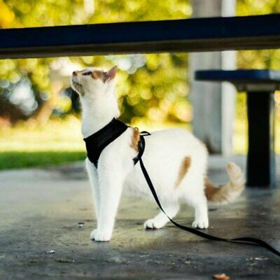 Adjustable Soft Mesh Cat Harness Vest for Pet and Small Dogs Walking S/M/L