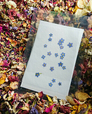 20 PRESSED FORGET ME NOT FLOWERS , Pressed Flowers , Real Forget Me Nots