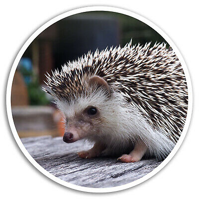 2 x 10cm Cute Hedgehog Vinyl Stickers Wildlife Sticker Luggage Laptop #8205