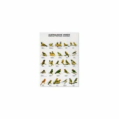 Poster Australian Finches Large Waxbill Finch Bird Poster for Birdroom Wall