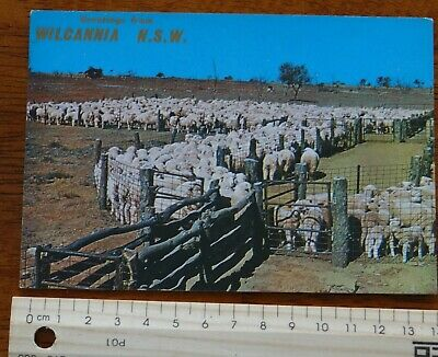 1 x RETRO GREETINGS FROM WILCANNIA NSW POSTCARD WC12a