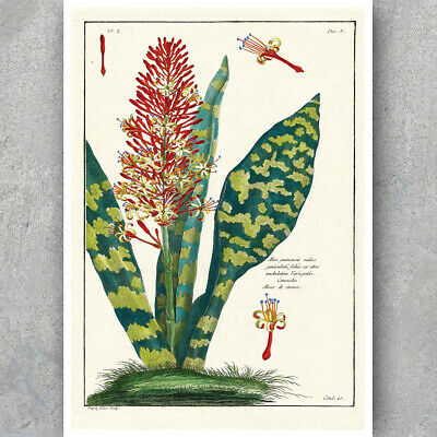 A3 A6 Vintage Botanical Poster - ALOE VERA - Plant & Flower Wall Art Decor Print