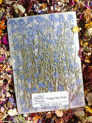 100 PRESSED FORGET ME NOT FLOWERS STEMS , Pressed Flowers , Real Forget Me Nots