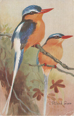 White-Tailed Kingfisher Tanysiptera, Roland Green Artist Signed Postcard
