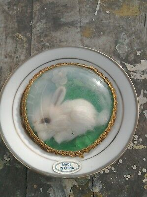 Rare Antique Chinese Porcelain Plate With Fur Rabbit With Glass Eye Glass Dome
