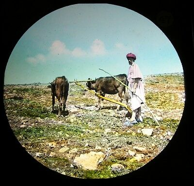 Antique magic lantern slide Holy Land Ploughing in Palestine photograph glass