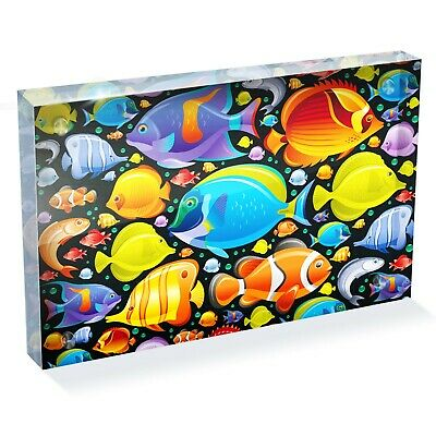"Tropical Fish Variety Photo Block 6 x 4"" - Desk Office Art Gift #8333"