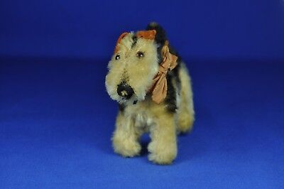 Steiff Terry Airedale Terrier, 1310,0 o. 1310,00, kein KFS / no IDs, 1951-1967