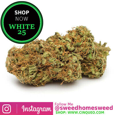 White 25 - Erba Legale Light 100% Indoor - Da 1,5 | 3,0 | 5,0 Gr - Uso Tecnico