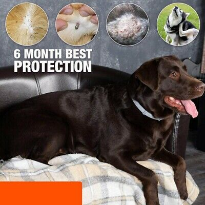 Pet Flea & Tick Collar for Small Dog Puppy and Cat Under 8kg (18 lbs) USA