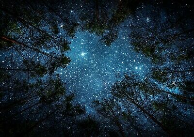 Awesome Stary Night Sky Forest Poster Size A4 / A3 Nature Poster Gift #8595