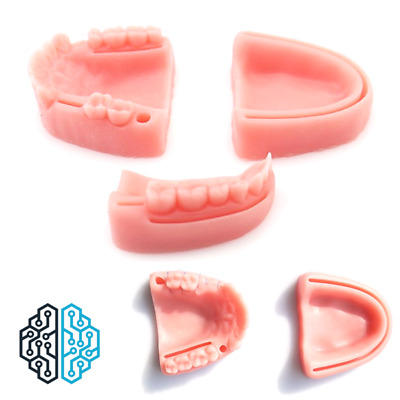 Realistic Student Medical Dental Suture Mould For Stitch Practice On Base - UK