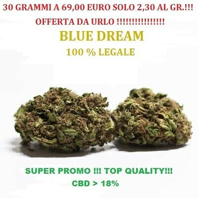 "Erba Legale light ""Blue Dream"" 30 grammi top quality certificata!!!  18%"