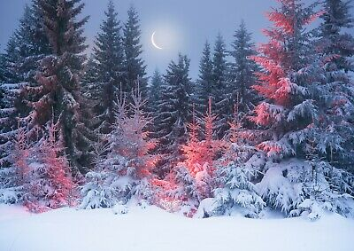 SNOWY FOREST WINTER AE027 Photo Poster Print Art * All Sizes NATURE POSTER