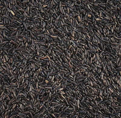 Maltbys' Stores 1904 Ltd 25Kg Niger / Nyjer Seed For Wild Birds
