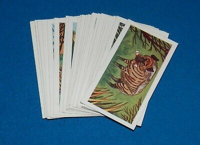 Mills Filtertips Wild Animals Complete Set of 25 Cigarette Cards