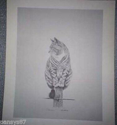 Vintage Pencil  Signed Lithograph Print Cat Limited Edition