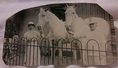 Vintage Old 1919 Photo of 2 Beautiful White Horses & Woman Man Dressed in White
