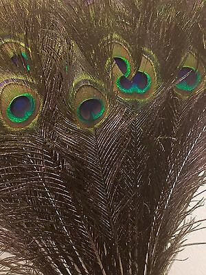 "100*Natural Peacock Feathers For Floral & Wedding Decorations- 31-33""/79-84 cms"