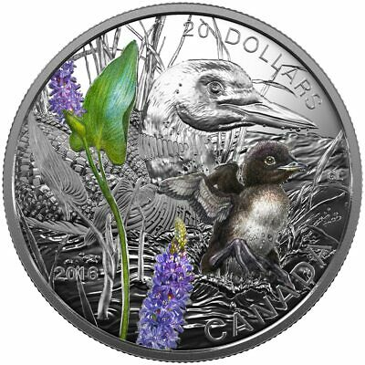 2016 $20 Fine Silver Coin - Baby Animals: Common Loon