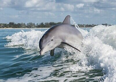 A4| Jumping Dolphin Poster Print Size A4 Animal Sea Creature Poster Gift #14237