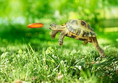 A3| Tortoise Turtle Poster Print Size A3 Sea Creature Animal Poster Gift #14390