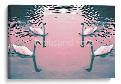 Four Lovely White Swans Canvas Meeting on Sunset Lake Wall Art Picture Home Deco