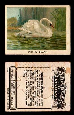 1923 Birds, Beasts, Fishes C1 Imperial Tobacco Vintage Trading Cards Singles