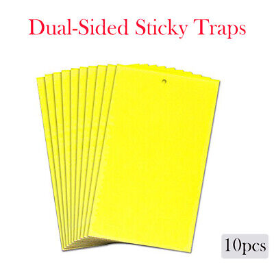 10x Large Yellow Sticky Insect Traps (25x15cm) Catch All Flying Greenhouse Pests