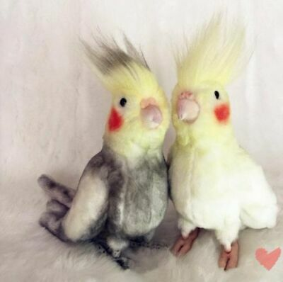 2 Colors Simulation Cockatiel Doll Stuffed Bird Plush Toy Animal Doll Kid's Gift