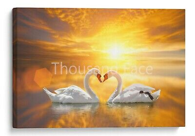 White Swan Canvas in Heart Shape Lake Sunset Wall Art Picture Home Decor