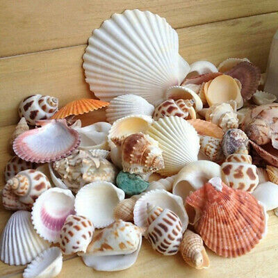 UK Approx 100g Mixed Beach SeaShells Mix Sea Shell Craft Natural Aquarium Decor
