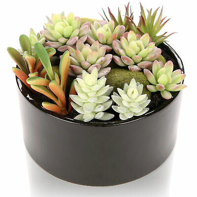 6 inch Artificial Succulent Plants Arrangement w/ Black Round Ceramic Vase
