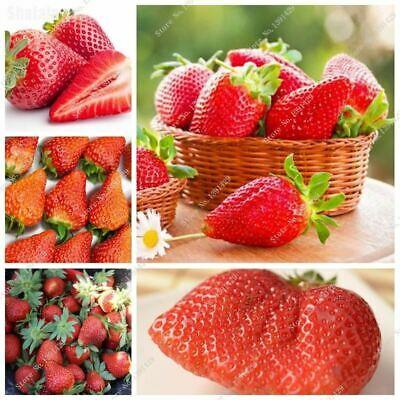 300 Red Strawberry Seeds very big and delicious ,Heirloom Vegetables and fruit s