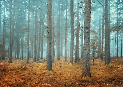Cool Misty Forest Poster Print Size A4 / A3 Pine Tree Nature Poster Gift #8721