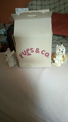 Westies with Paper