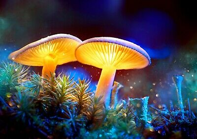 A4| Magical Mushroom Poster Size A4 Fantasy Fairy Land Art Poster Gift #14811